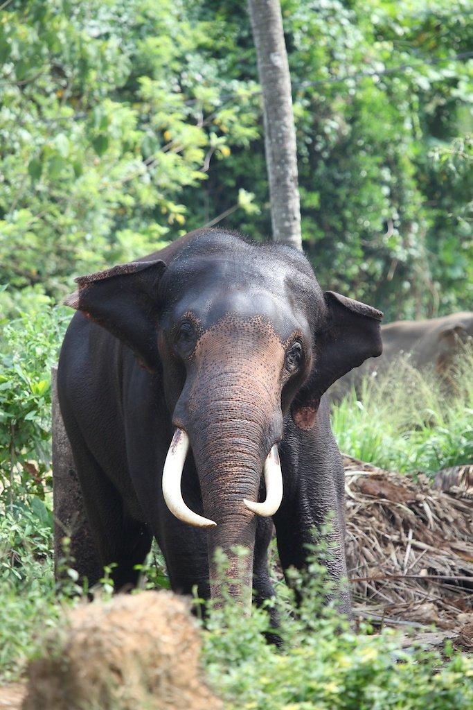 Sri Lanka (2013)
